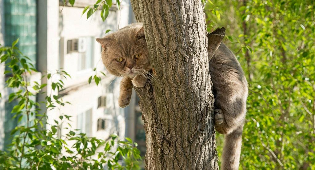 Кота можно позвать, иногда животные спускаются на голос любимого хозяина