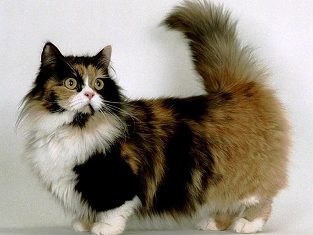 Сколько хромосом у кошки и кота