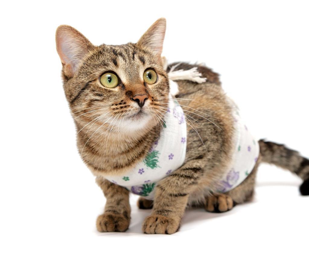 Попона для кошки