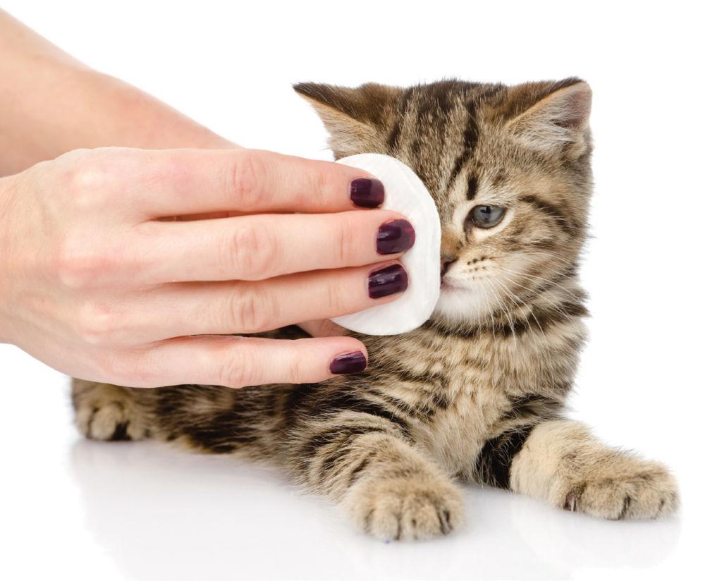 Аккуратно промойте глазки котенку