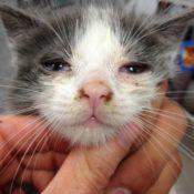 Симптомы и лечение ринотрахеита у кошек в домашних условиях