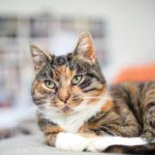 Опасные симптомы и лечение лямблиоза у кошек