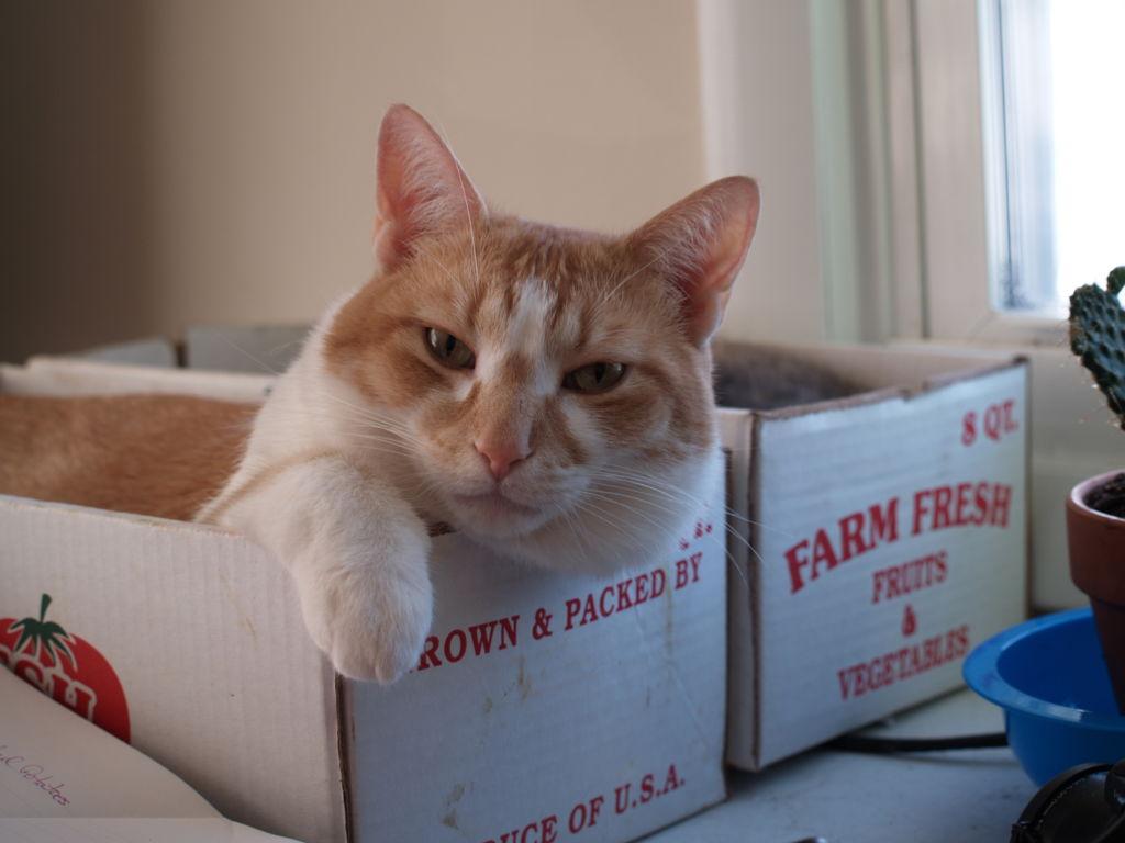 Причин для развития панкретита у кошки довольно много
