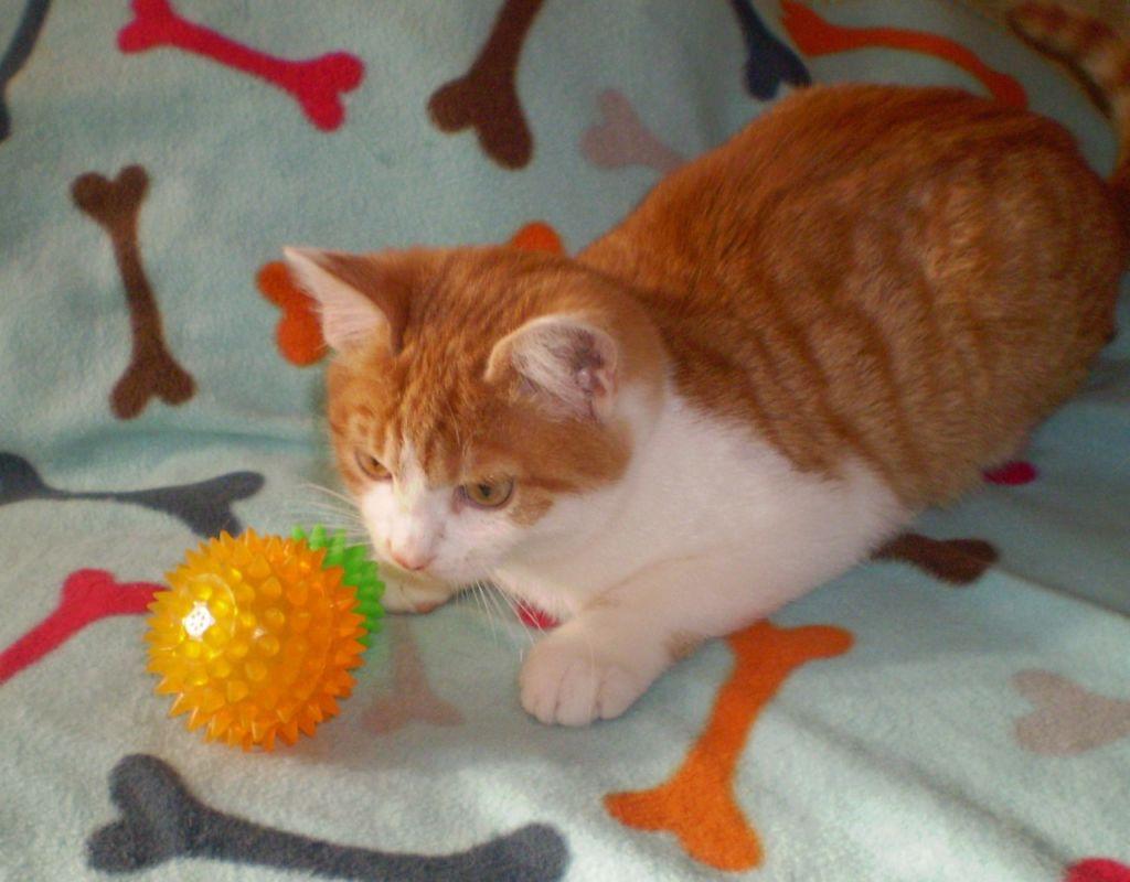 Мячики любых размеров покоряют кошек
