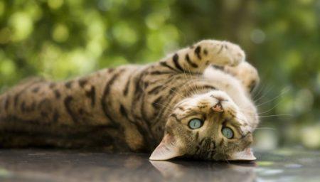 Эпилепсия у кошки симптомы и лечение в домашних условиях 145