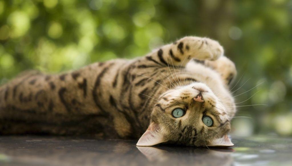 Не трогайте кота во время эпилепсии