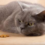 Симптомы и лечение аллергии на корм у котят