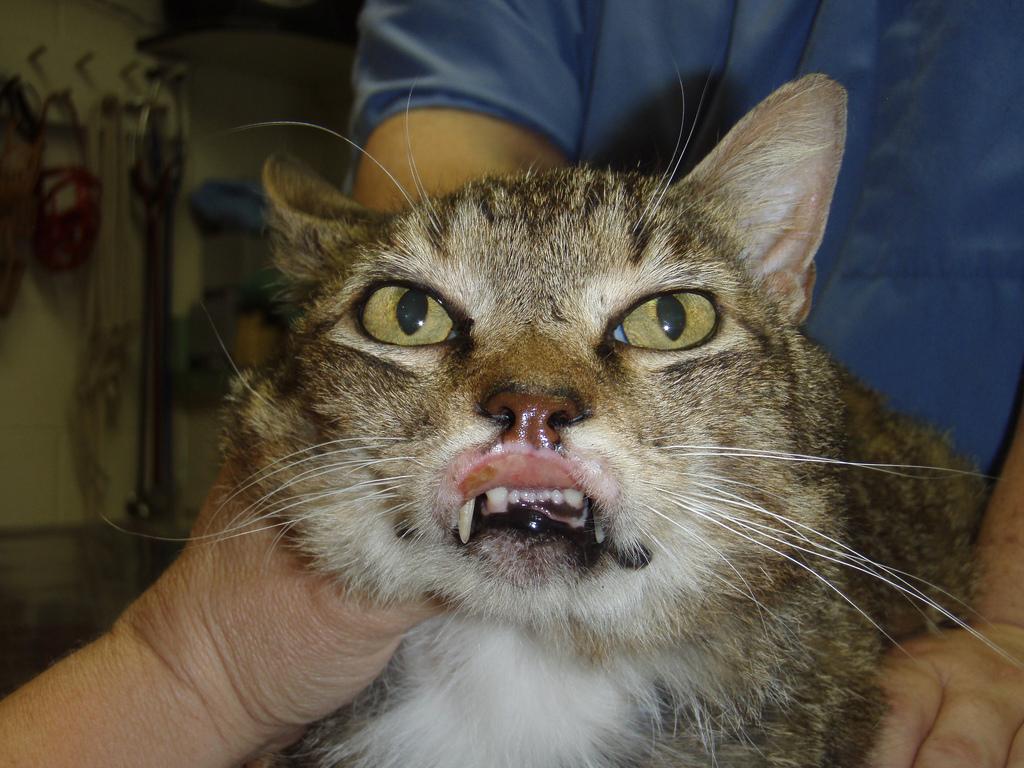 эПри обширных новообразованиях у кошки они удаляются хирургическим путемозинофильная гранулема у кошек