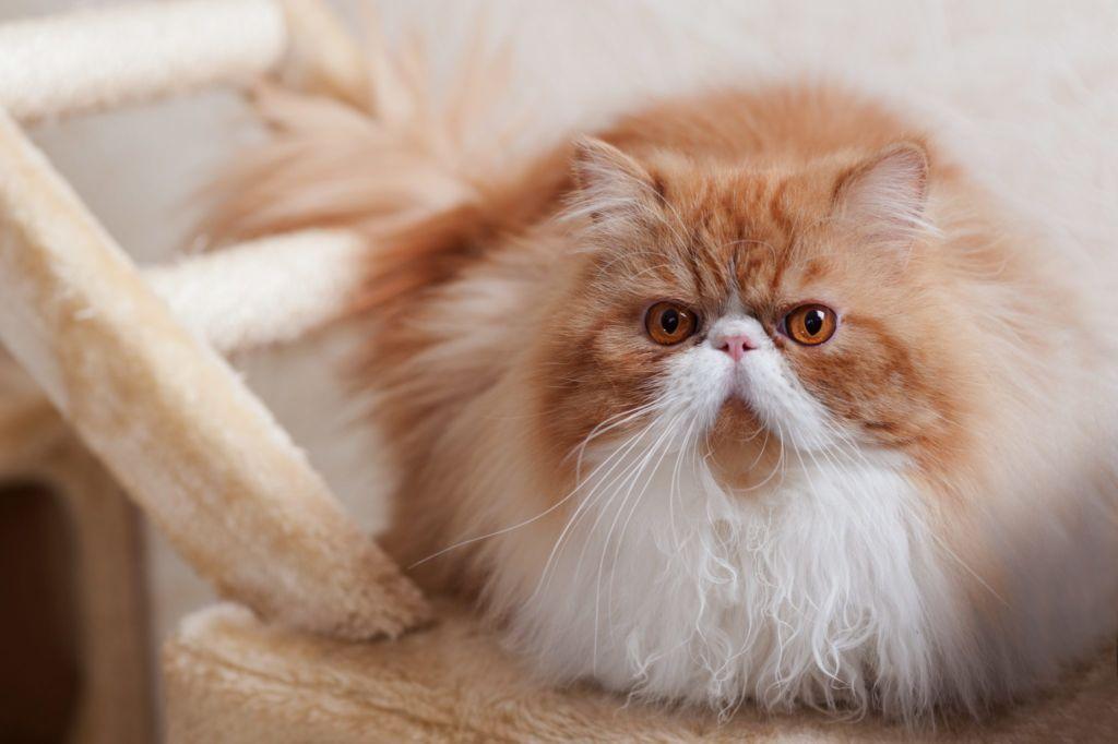 Почечным заболеваниям подвержены породистые животные