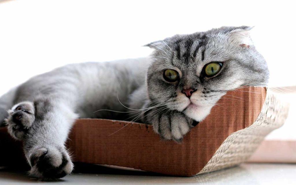 Делая прививку котенку, вы тем самым оберегаете его жизнь и здоровье