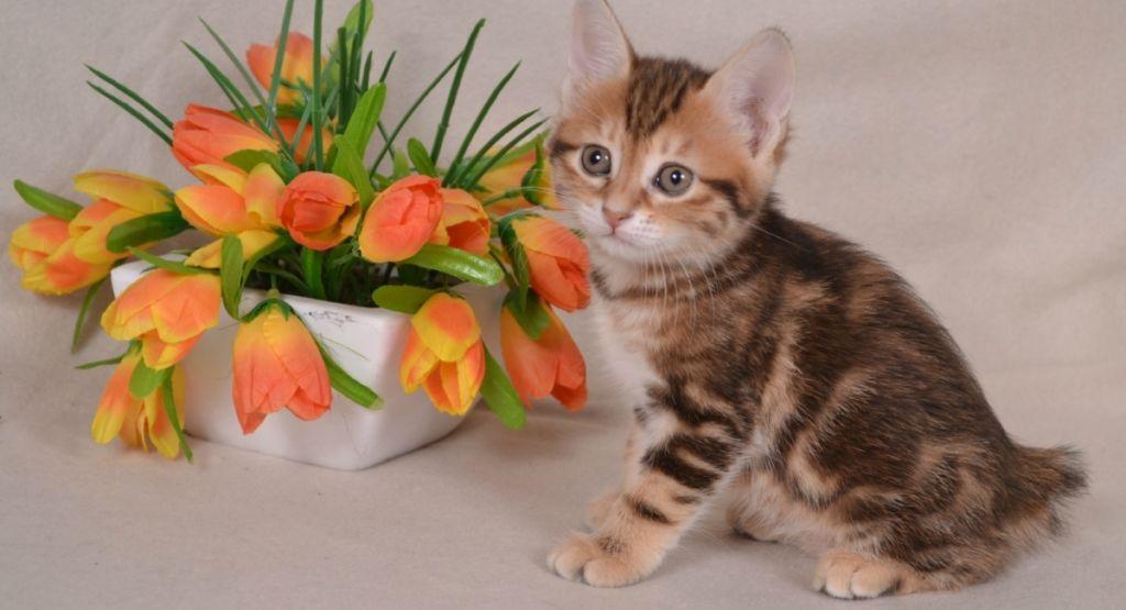 Причины выпадения прямой кишки у котенка и что делать