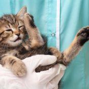 Симптомы и лечение эпилепсии у кошек в домашних условиях