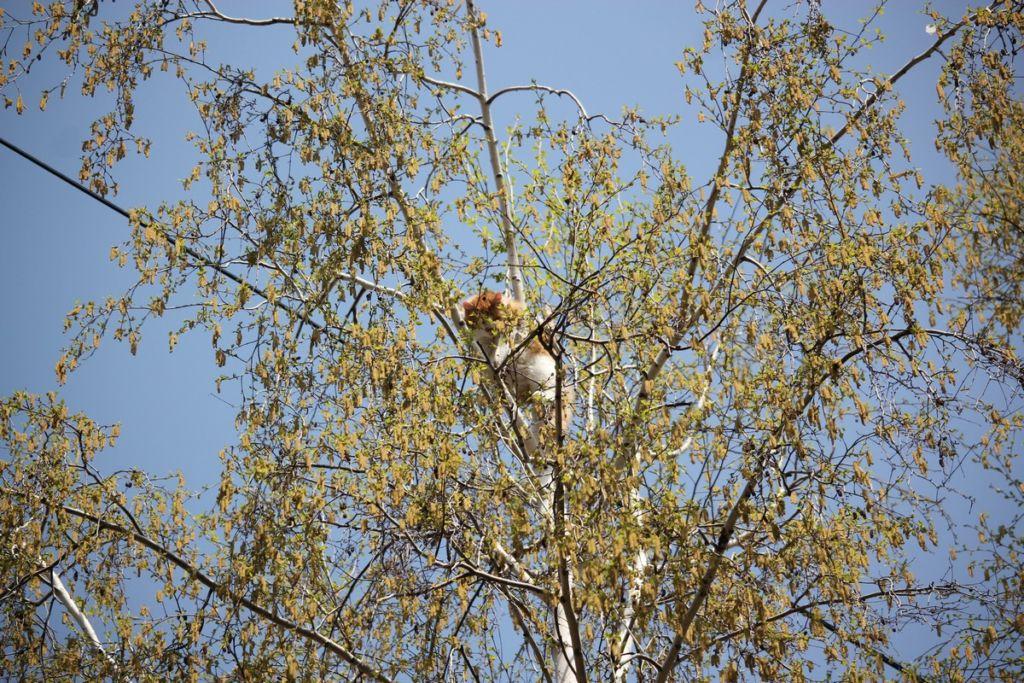Далеко не всегда кот может слезть с дерева сам