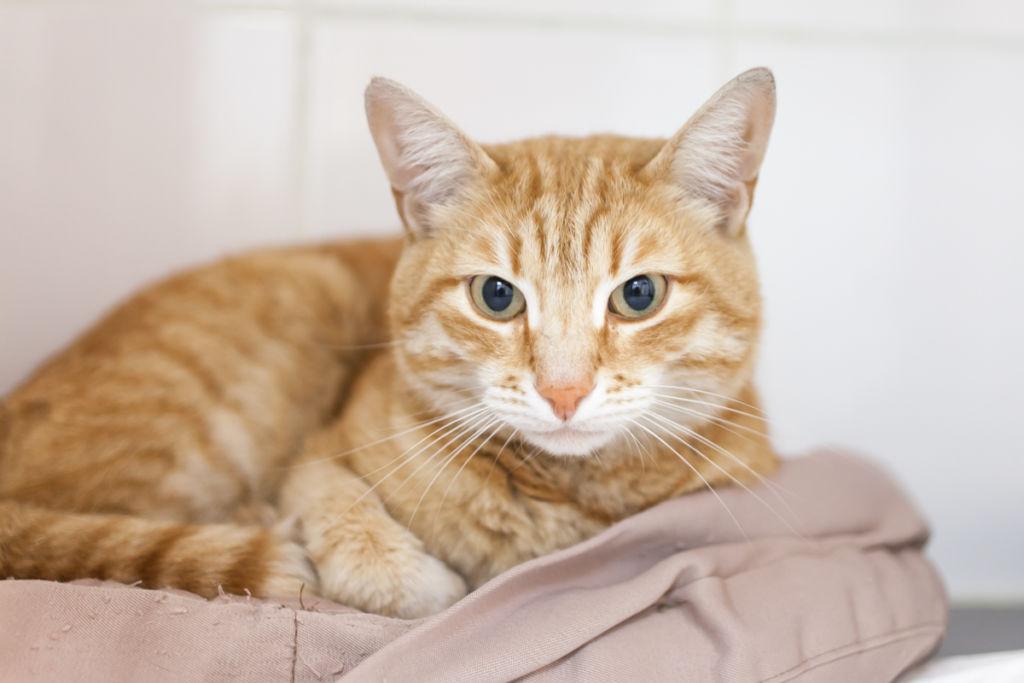 3 вида вирусного энтерита у кошек, симптомы и методы лечения