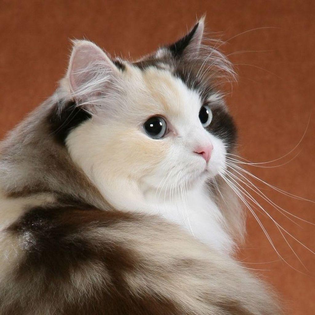 Кошки и молодые коты значительно меньше размером, чем взрослые питомцы мужского пола