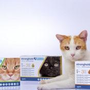 Инструкция по применению препарата стронгхолд для кошек и собак