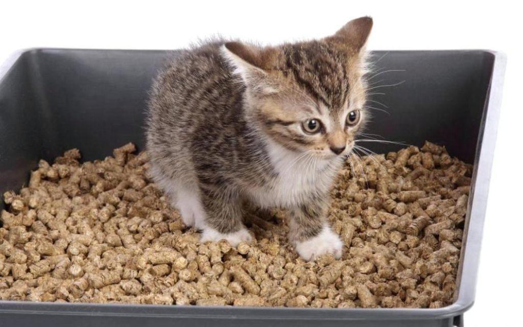 Наиболее опасен для кота силикагелевый наполнитель
