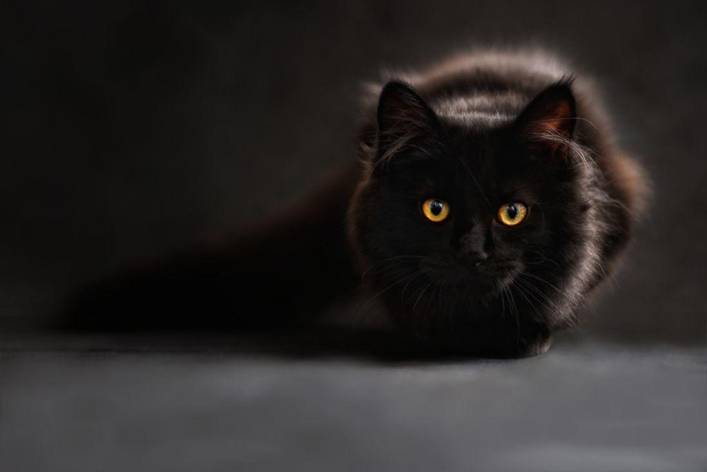 10 самых красивых черных кошек разных пород