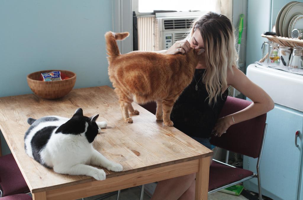 Помощь владельца при вязке кошек