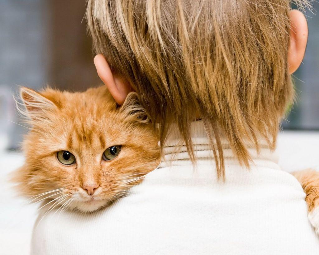 Кошачьи вши не заразны для человека