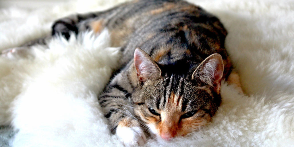 Лечить кошку можно в домашних условиях