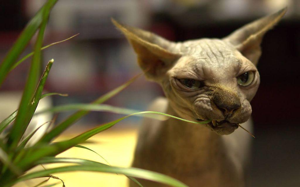 Питание кошки должно быть насыщено витаминами