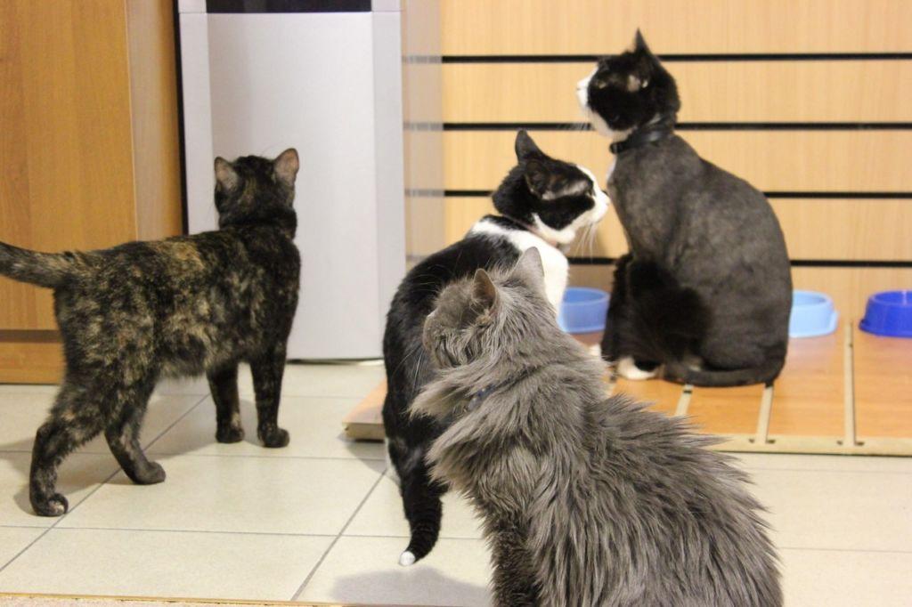 В котокафе можно погладить котов и кошек и поиграть с ними, а также насладиться их мурчанием