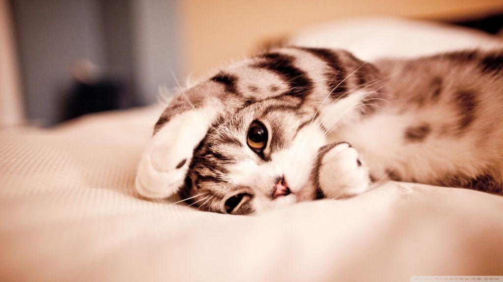 Симптомы и методы лечения цирроза печени у кошек