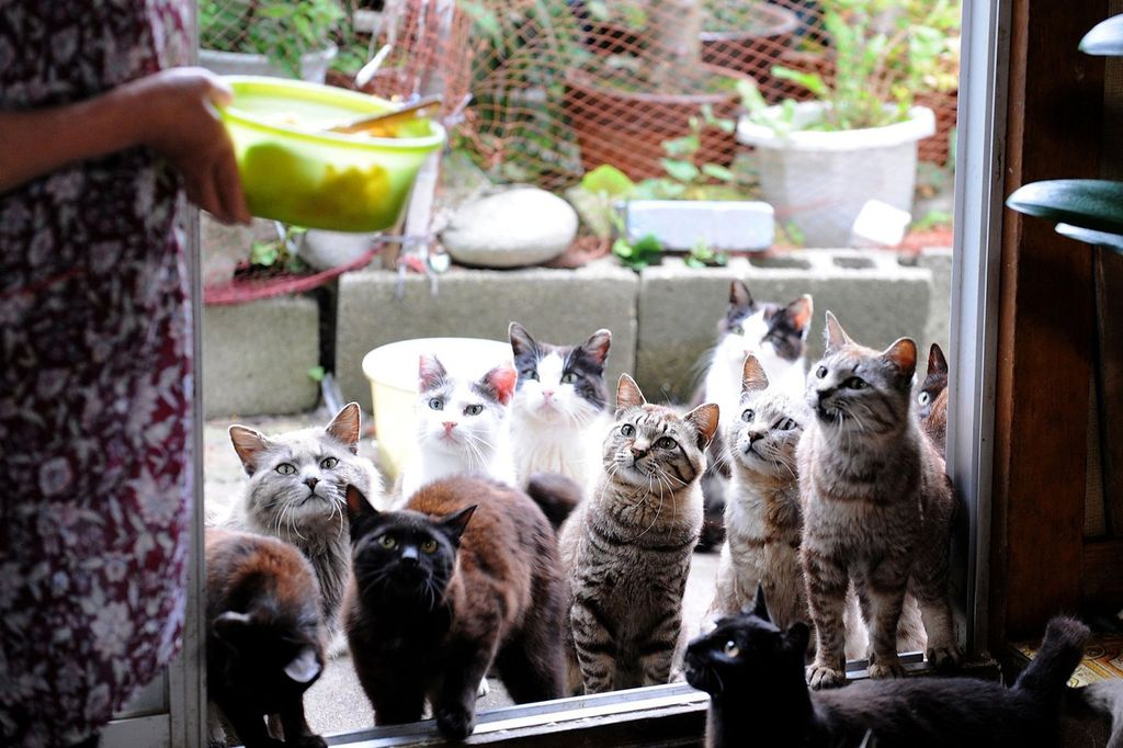 Кошки, проживающие большими группами, входят в зону риска