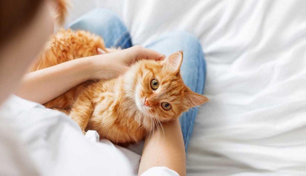 Заболевание не передается от кошки к человеку