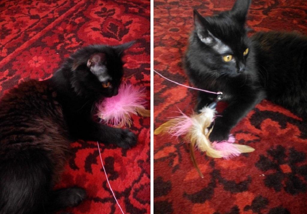 Игра котенка с перьями