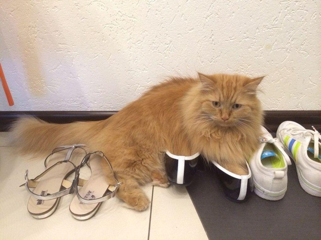 Чем обработать места где гадит кошка
