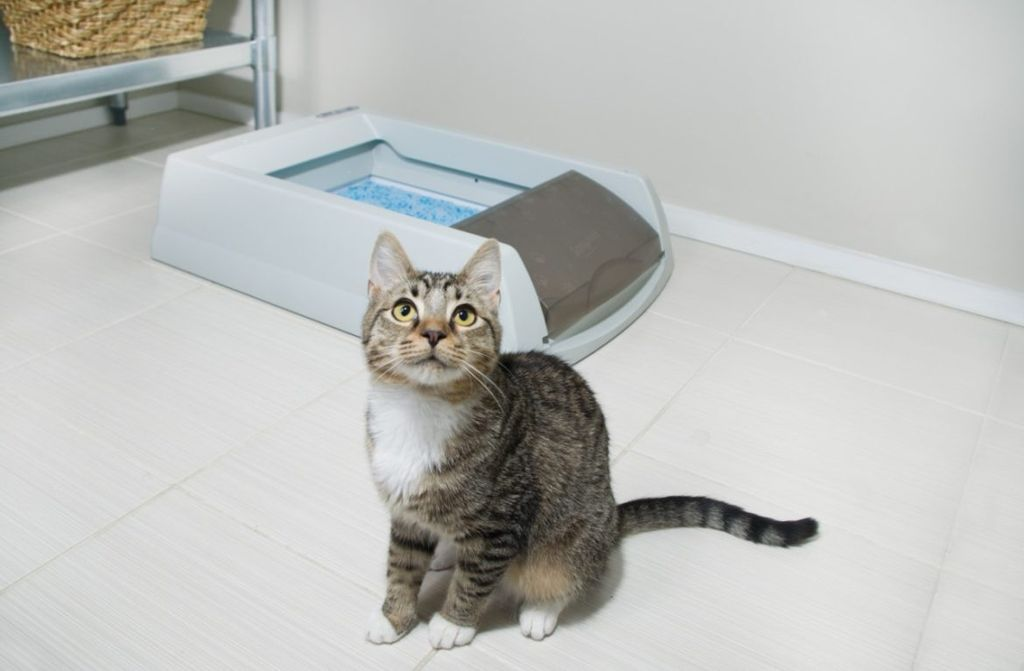 Кошка может гадить из-за грязного лотка