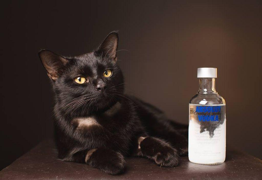 Кошки не переносят запах спирта и алкогольных продуктов