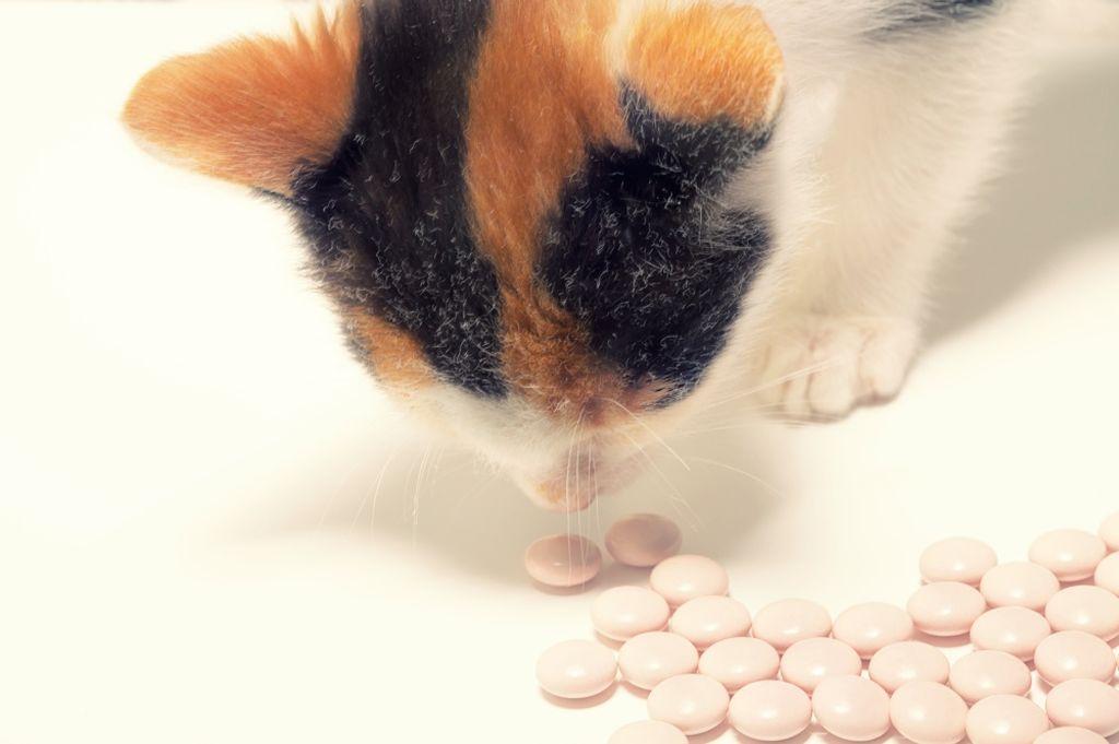Успокоить кошку помогут специальные капли или таблетки на основе трав
