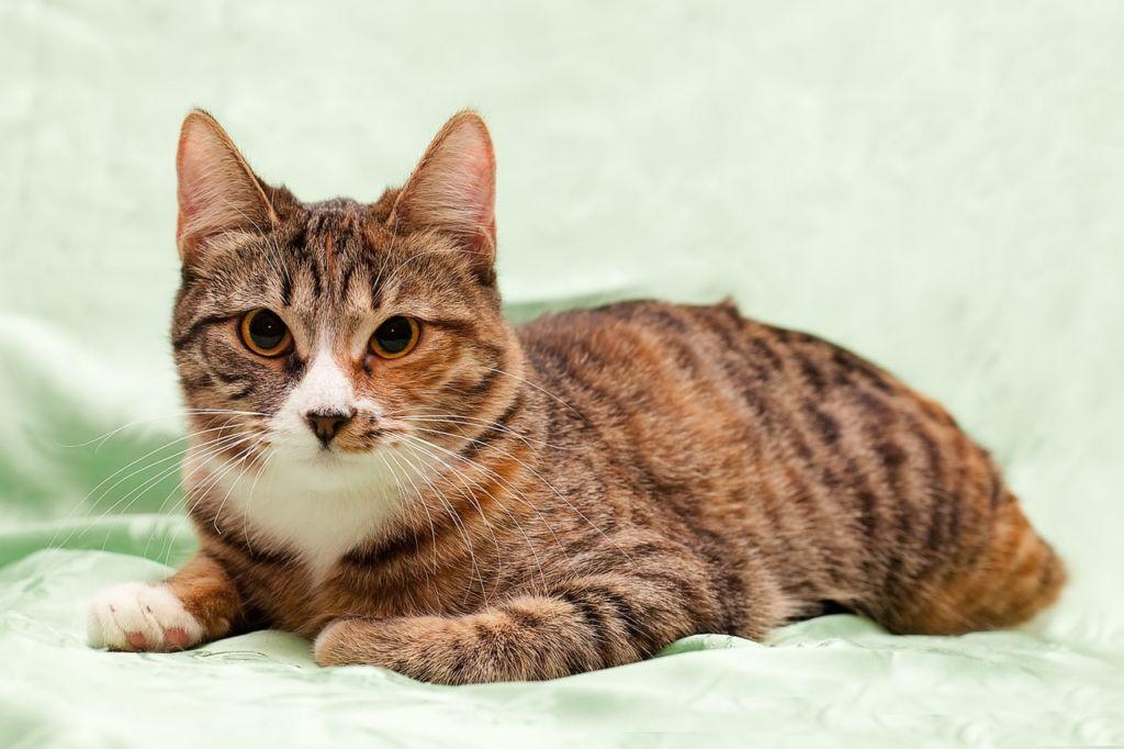 Симптомы и лечение герпеса или герпесвирусного ринотрахеита у кошек