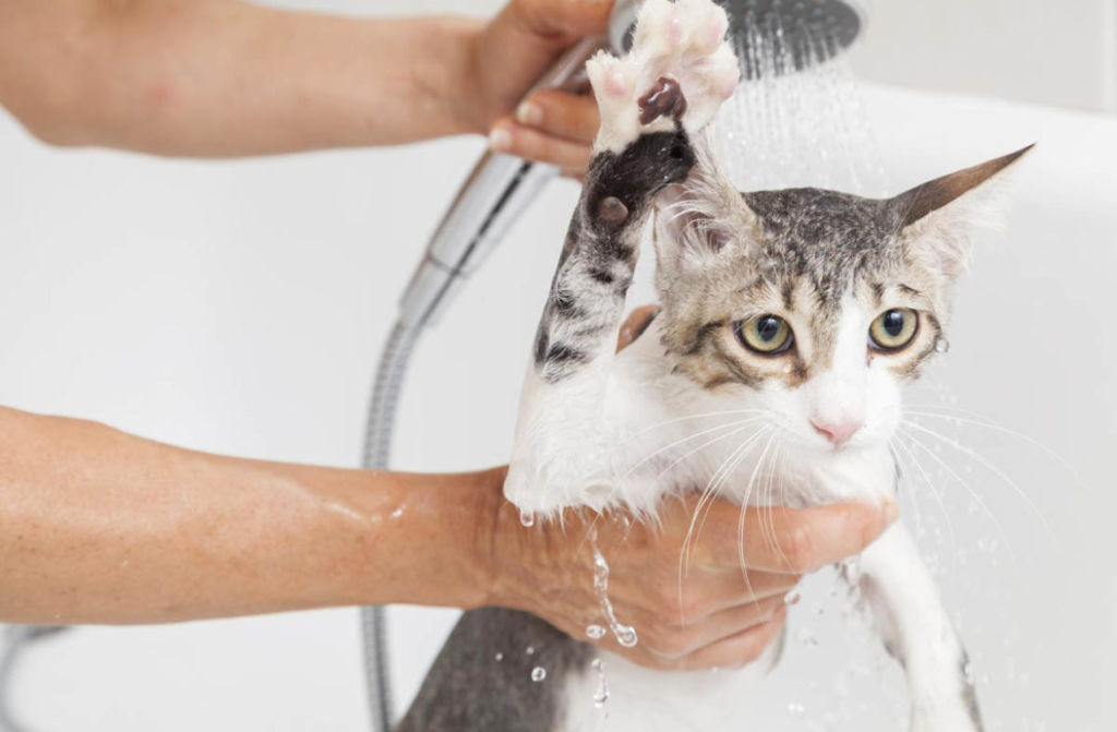Обмывание кожи питомца с помощью мыла, в состав которого входит березовый деготь