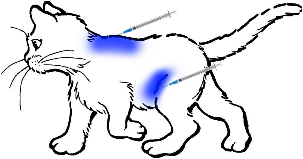 Места для подкожных уколов на теле кошки