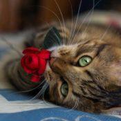 Симптомы и лечение лимфомы кишечника у кошек