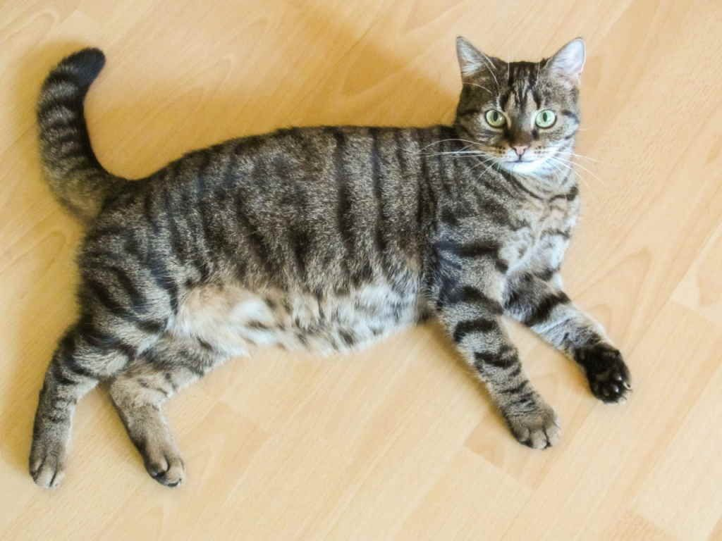 Как сделать клизму коту в домашних условиях