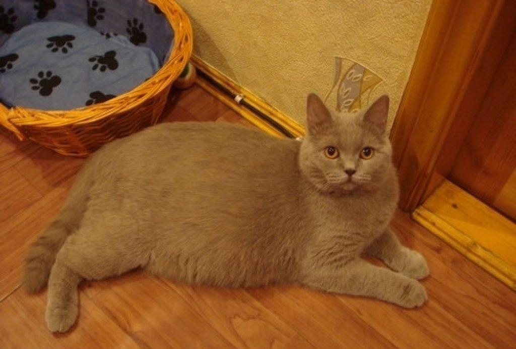 Любые выделения у кошки, длящиеся более 10 минут должны насторожить