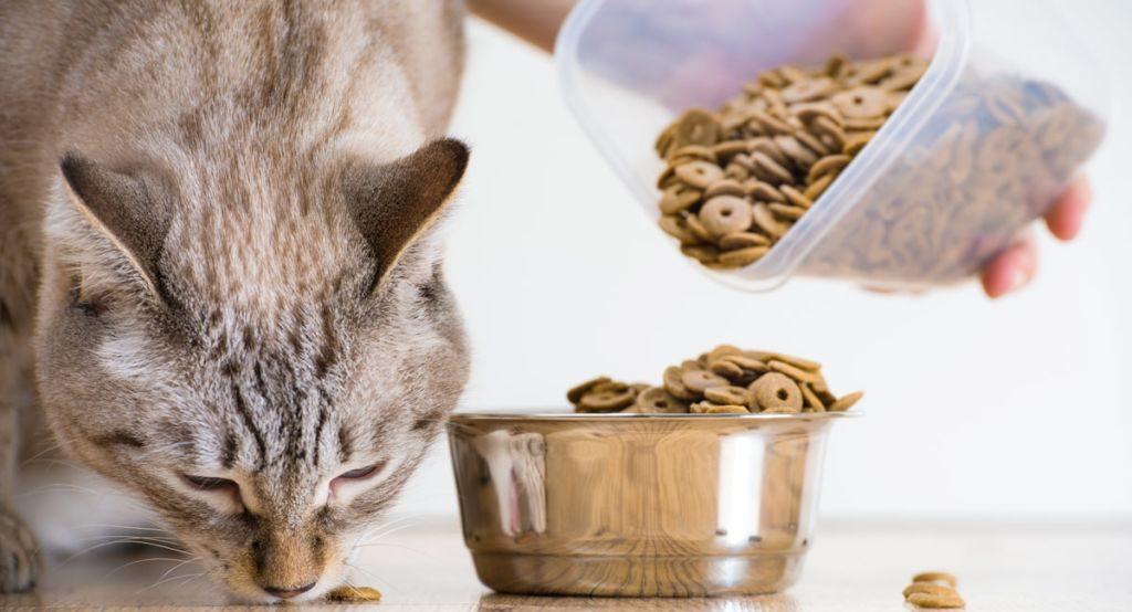 Во избежания заражения питомцем инфекцией, следите за питанием животного
