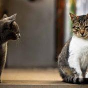 Симптомы и лечение цистита у кошек в домашних условиях