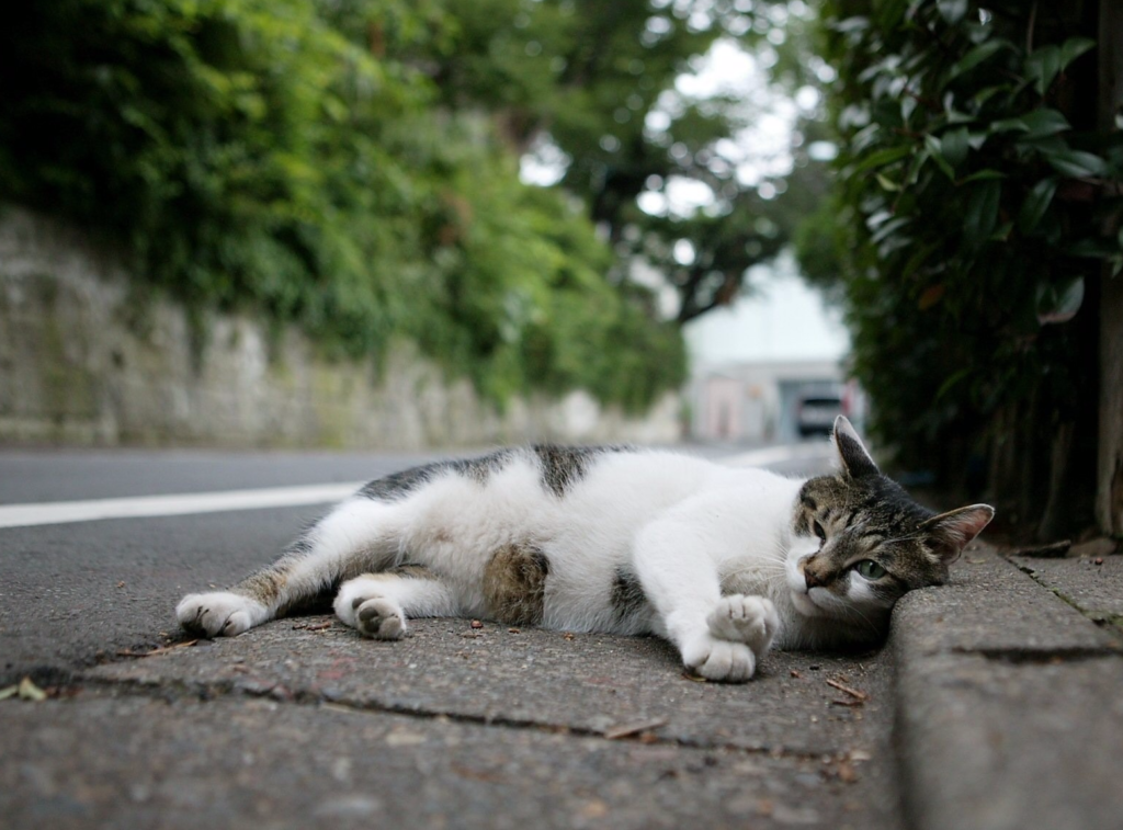 Сами по себе кошки уходят из дома часто перед смертью