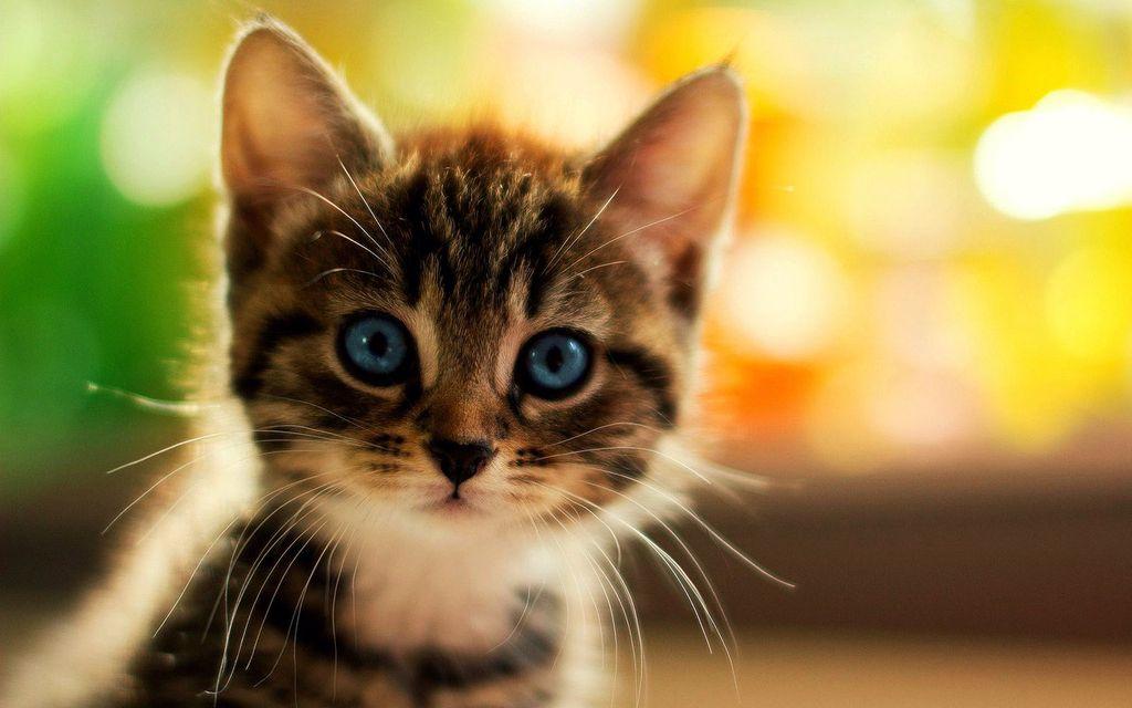 Первые дни котенка в доме