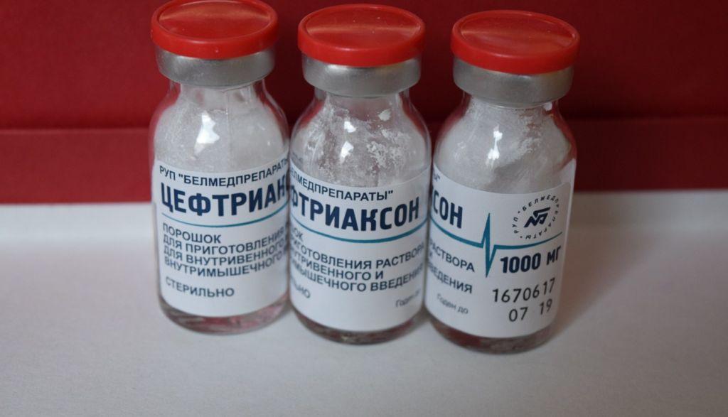 Антибиотик цифриаксон первая помощь питомцу