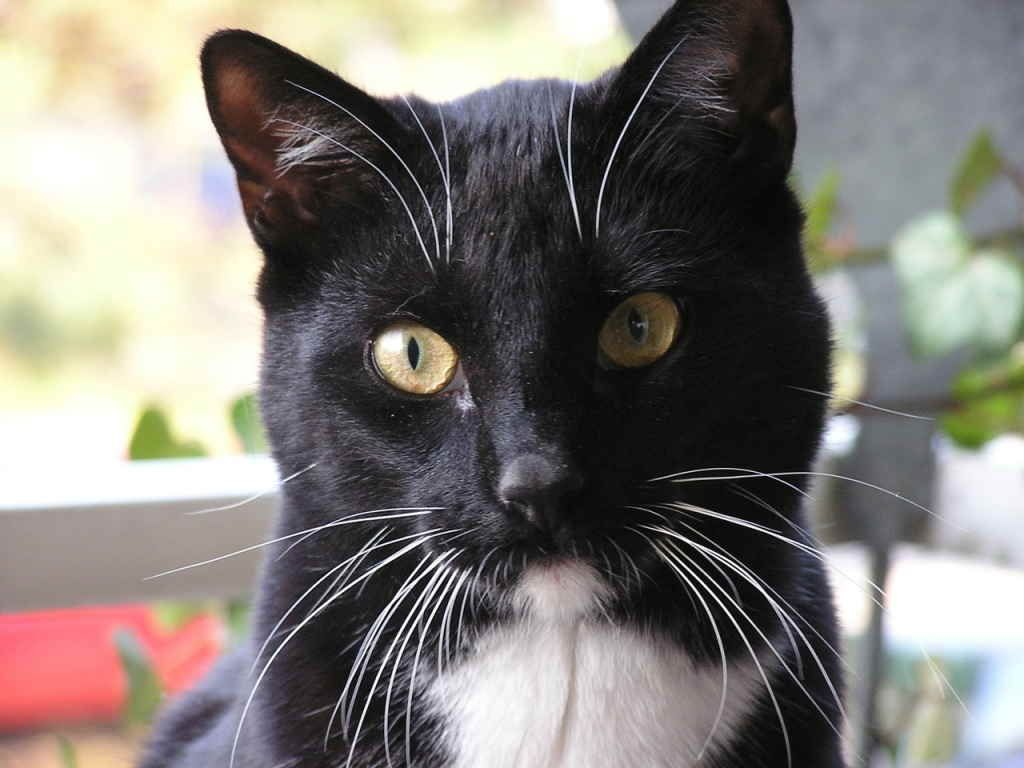 5 причин, почему у кота, кошки или котенка ломаются и выпадают усы