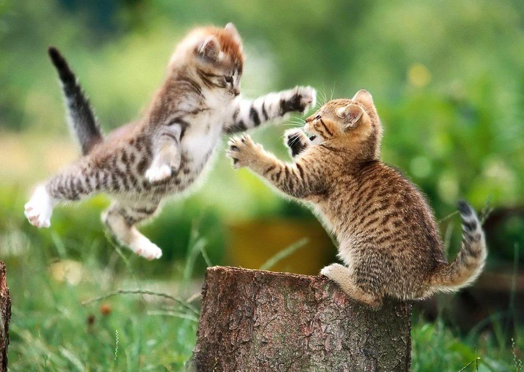 Котята могут потерять или сломать усы во время игр