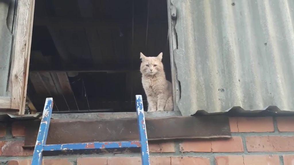 кошка пропала в частном доме
