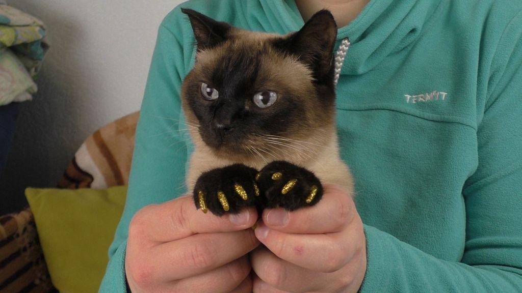 Клеим силиконовые колпачки на когти коту